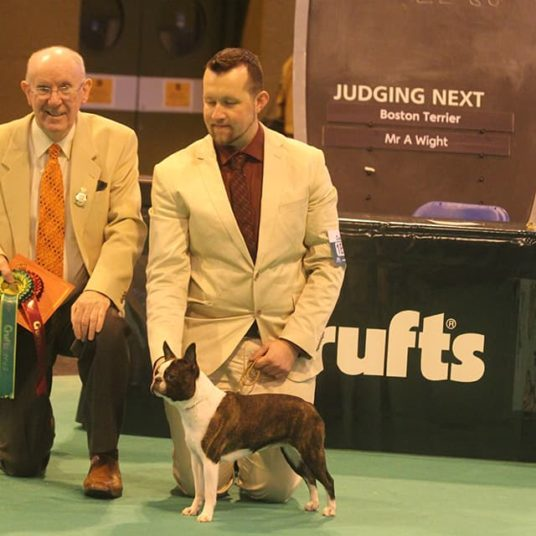 Boston-Terrier-Hessenvilla-Crufts-2-min
