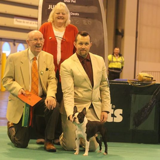 Boston-Terrier-Hessenvilla-Crufts-3-min