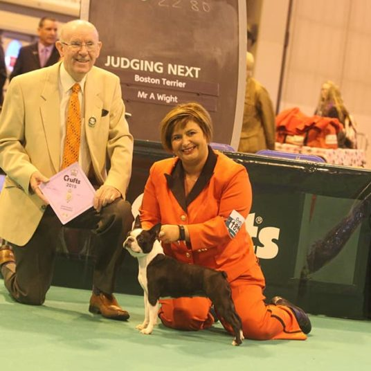 Boston-Terrier-Hessenvilla-Crufts-6-min