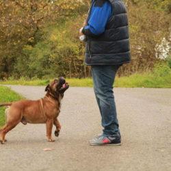 Hessenvillas-Continental-Bulldog-Bronson4-min