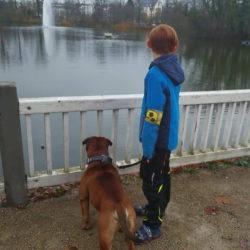 Hessenvillas-Continental-Bulldog-Bronson8-min