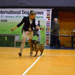 Hessenvilla-International-Dogshow-Bulgarien-2-min