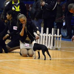 Hessenvilla-International-Dogshow-Bulgarien-4-min