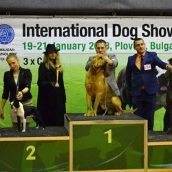 Hessenvilla-International-Dogshow-Bulgarien-5-min