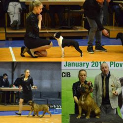 Hessenvilla-International-Dogshow-Bulgarien-6-min