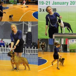 Hessenvilla-International-Dogshow-Bulgarien-7-min