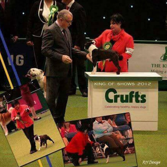 Hessenvillas-Kennel-Boston-Elvis-Crufts-2013-3-min-min