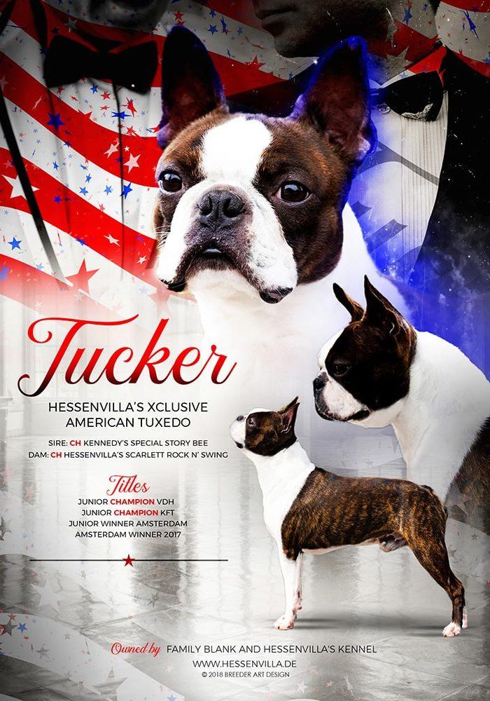 Hessenvilla-Tucker-advert-min