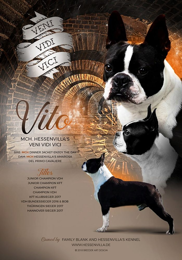 Hessenvilla-Vito-advert-min