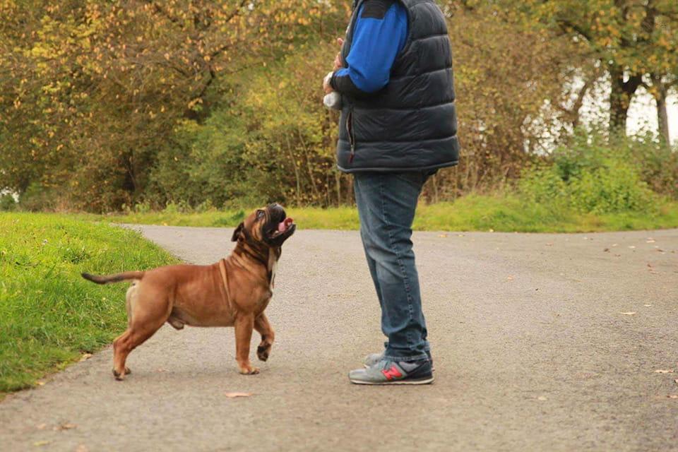 Continental Bulldog – Hessenvilla